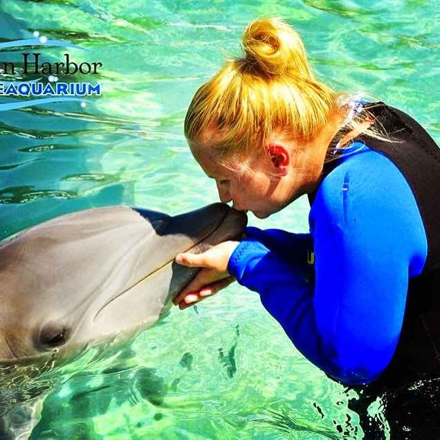 Dolphin snogging in Miami