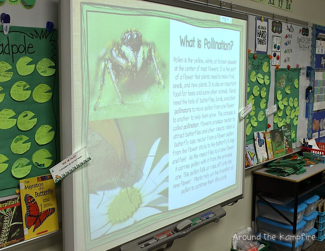 Butterfly life cycle pollination lesson