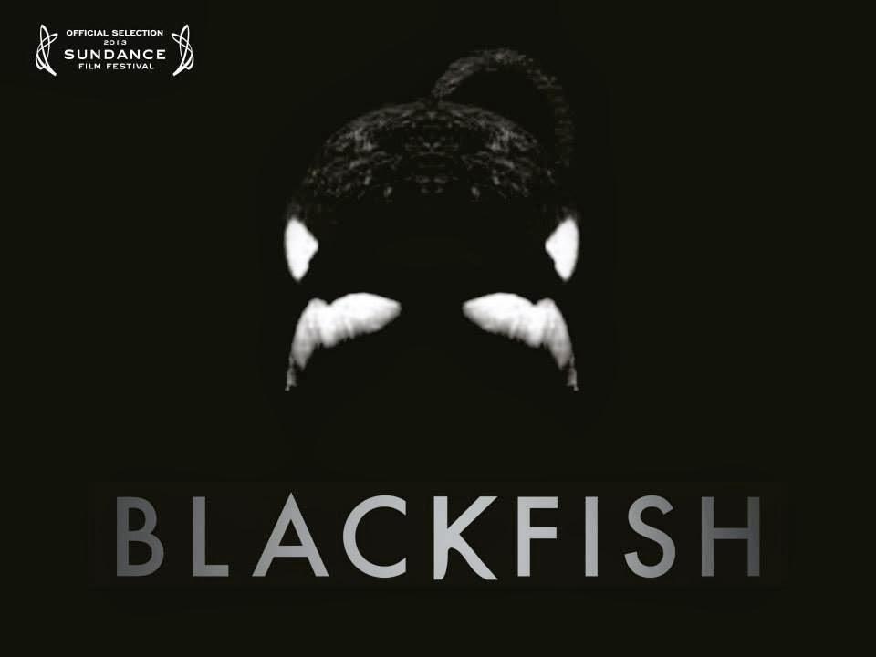 Precioso documental sobre la triste vida de las orcas en los acuarios