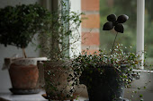 "Växter från ""Glass au fleurs"""