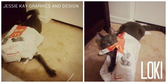 Loki being crazy. | Jessie Kay Graphics and Design