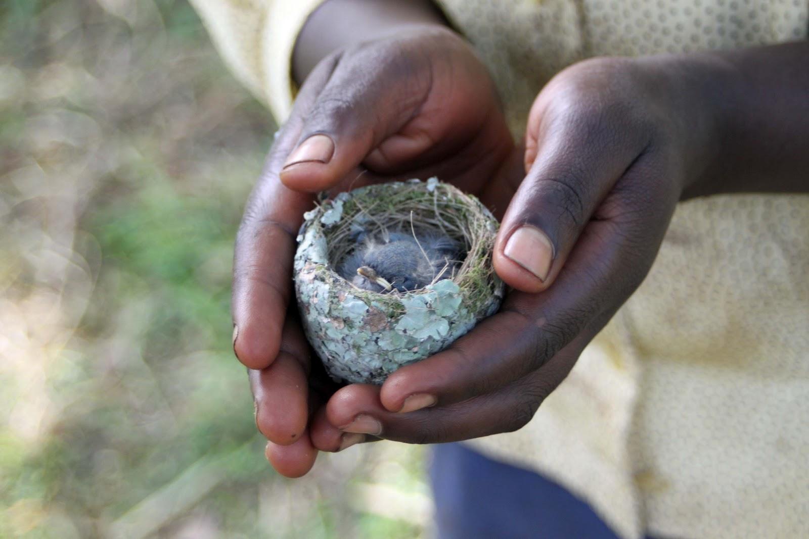 http://4.bp.blogspot.com/-dz_S6DmtocA/T9dClPqM8YI/AAAAAAAAAX4/9IqpVstXREI/s1600/1baby+bird.jpg