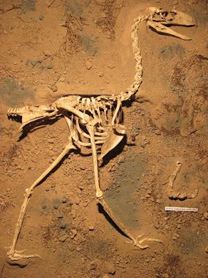 prehistoric birds Llallawavis