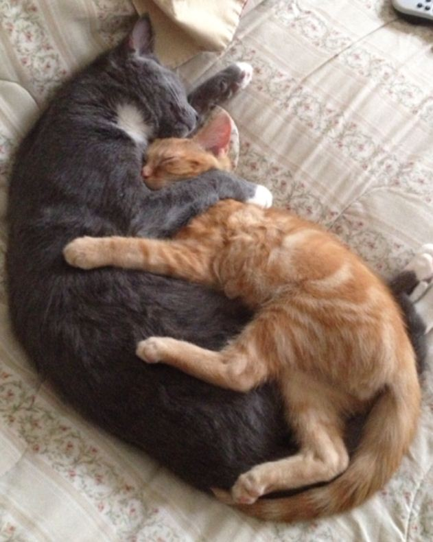 Funny cats - part 58 (30 pics + 10 gifs), funny cat photos, kitten pics, funny cats and kittens, funny photos of cats