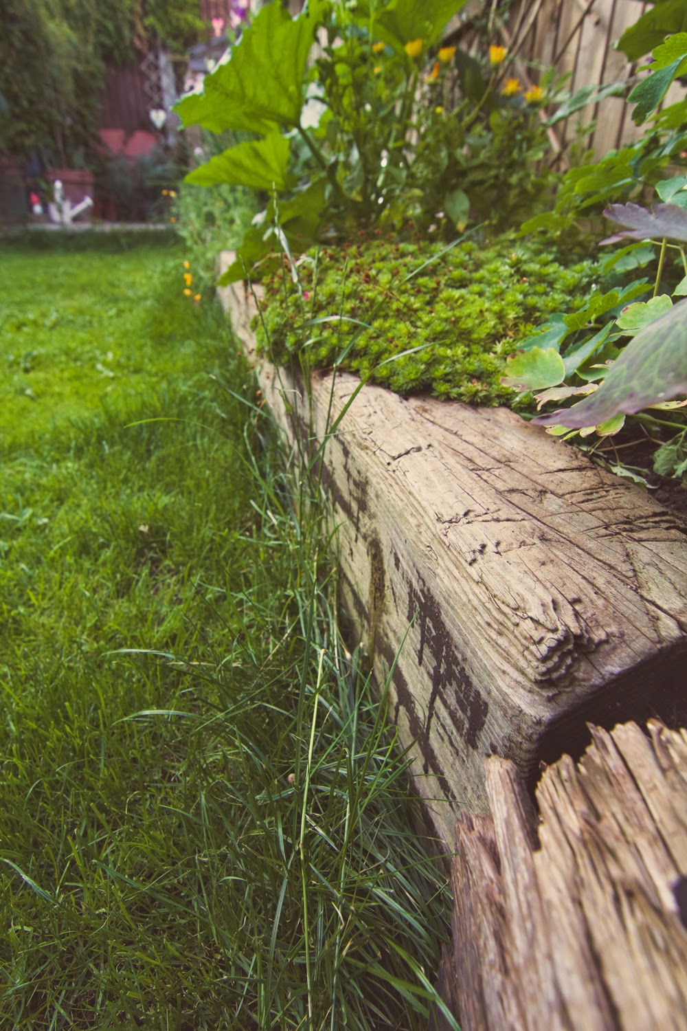 Rustic railway sleepers as garden borders