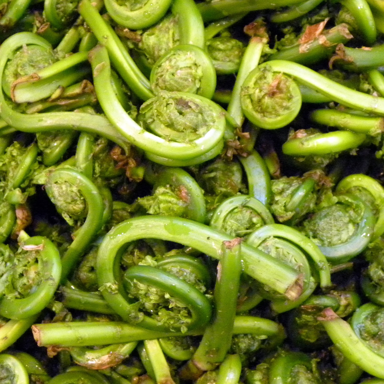 Cook's Cache: Fiddlehead Ferns