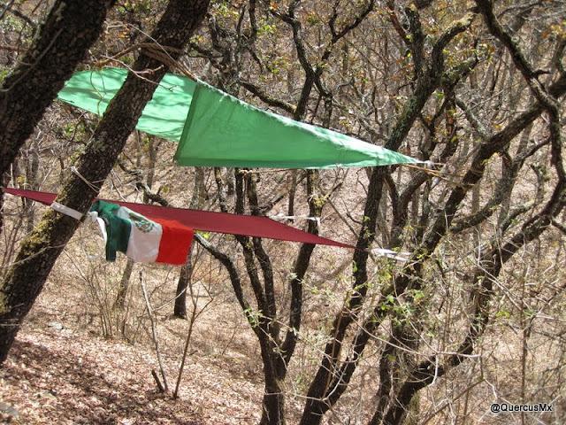 Hamaca de Quercus V3.0 al pie de la Sierra del Ixtle y de la Sierra del Tecuán, en primavera