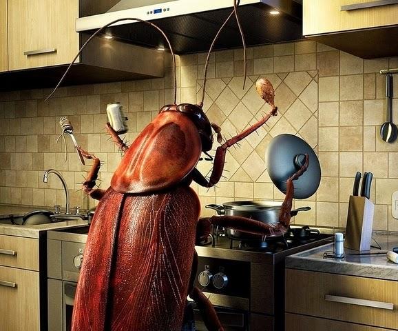 Hamamböcekleri için en etkili çare nedir