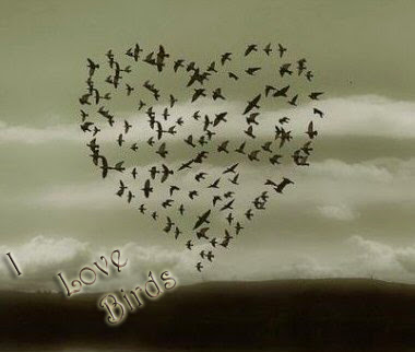 lets be love  birds