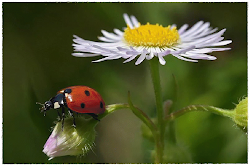 ....daisies and lady bugs.