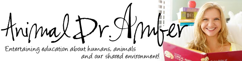 Dr. Amber's Blog