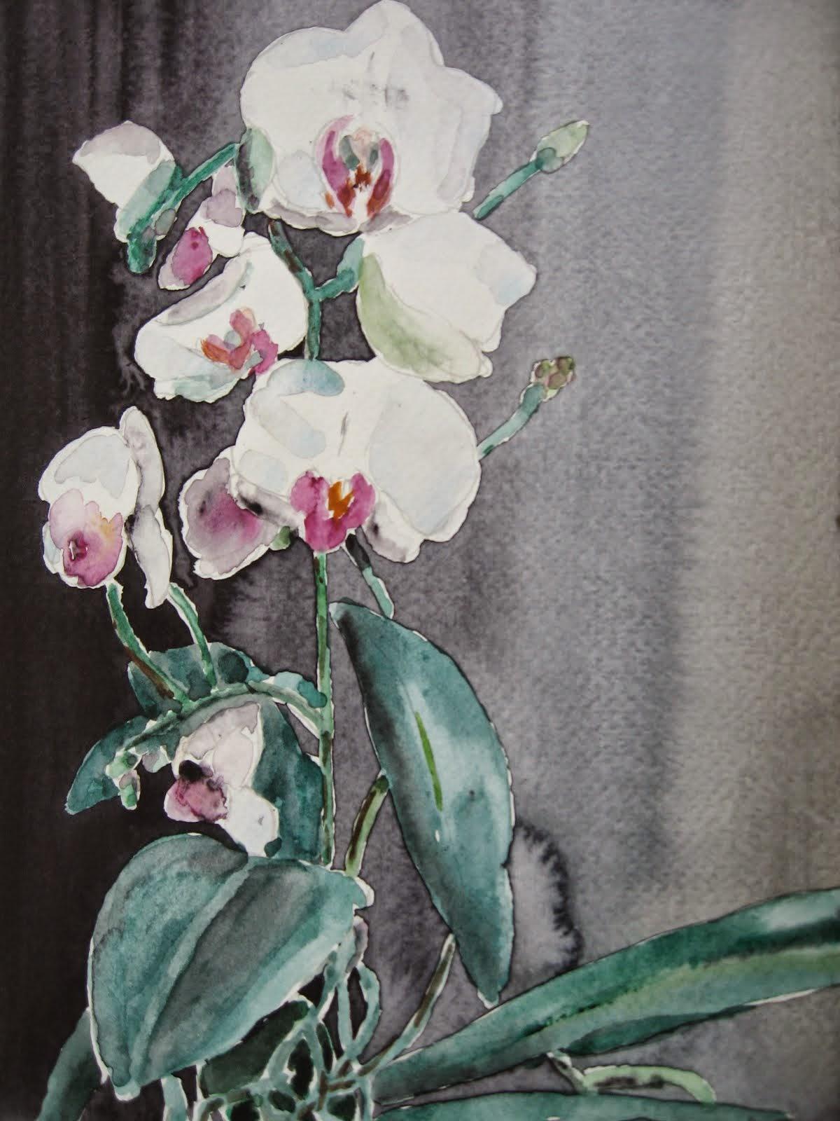 Ah, essas orquídeas do João!