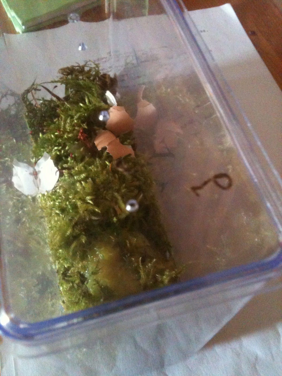 how to put egg shells in garden to prevent snails