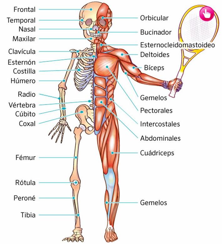 TICS UTILES PARA LOS MÁS PEQUEÑOS: El cuerpo humano: Esqueleto y ...