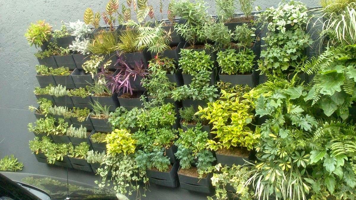 Huerto o jard n vertical qu es un huerto o jard n vertical - Macetas para jardin vertical ...