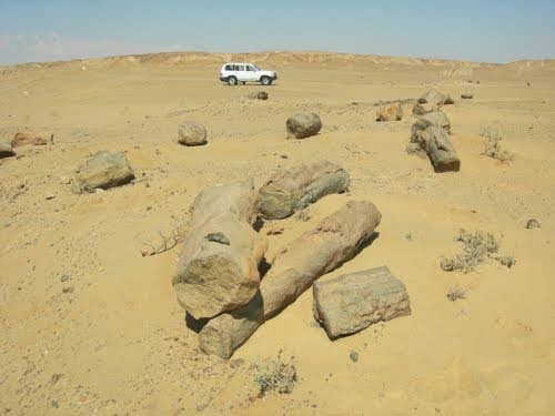 Petrified trees on ancient coast, witnesses of Great Flood, Sahara, Africa