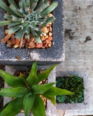 وضع النباتات مع التزيين بالحجارة