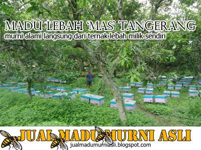 Lokasi Peternakan Lebah Madu