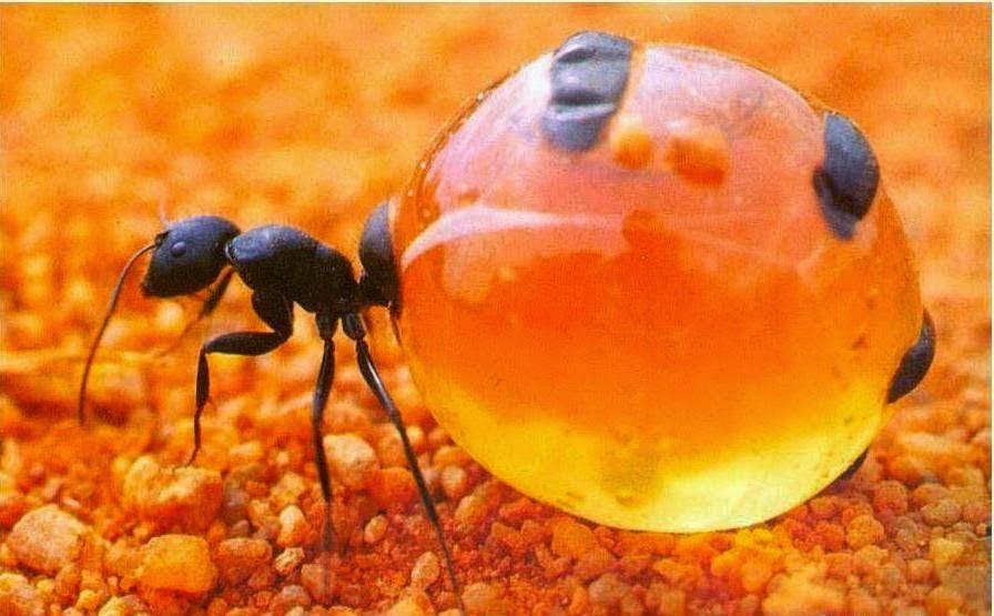 معجزة النمل التي ذكرها القرآن منذ 1400 عام