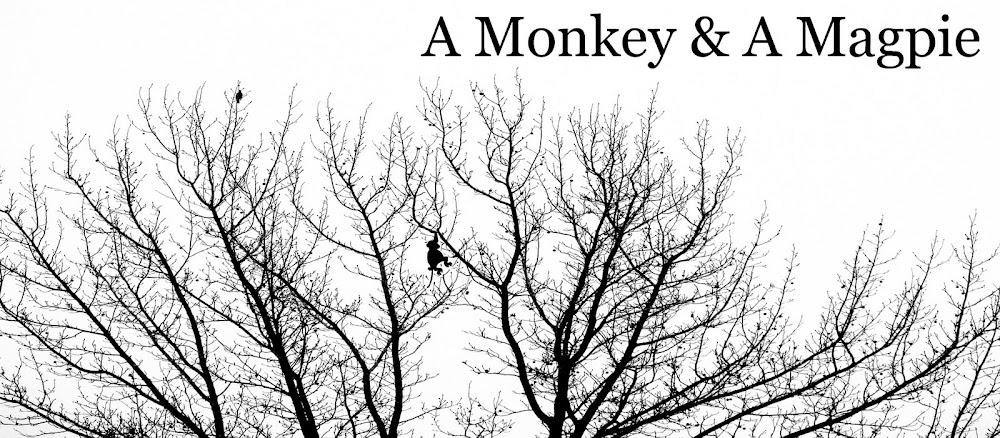A Monkey & A Magpie