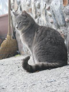 Cats Mastichari Kos