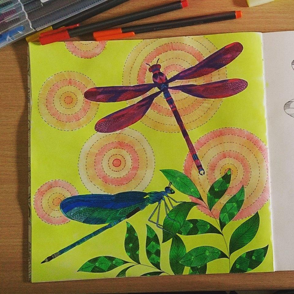 Kolorista Dragonfly Colouring Book