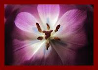 Flor nascida