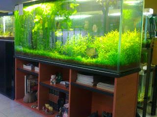 Acuarios decorpez mayo 2012 for Disenos de acuarios