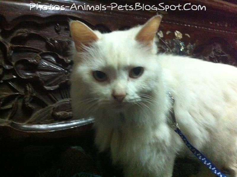 http://4.bp.blogspot.com/-e3iWK_z5onA/TbGitdPbvBI/AAAAAAAAAvY/b8h2_WqJrqM/s1600/Cat%2Bfur%2Bruffled_0004.jpg
