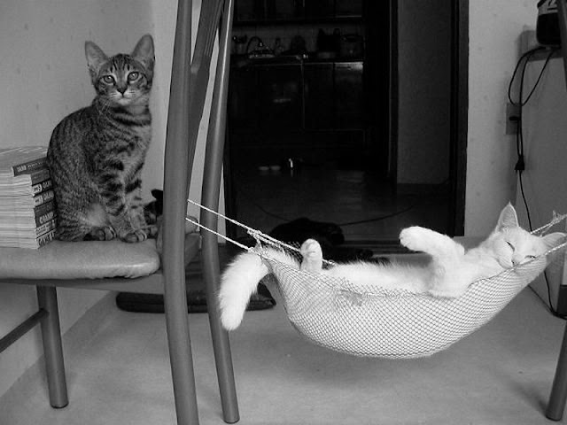 funny animal pictures, playing kitten