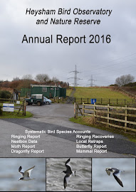 2016 HEYSHAM OBS REPORT AVAILABLE
