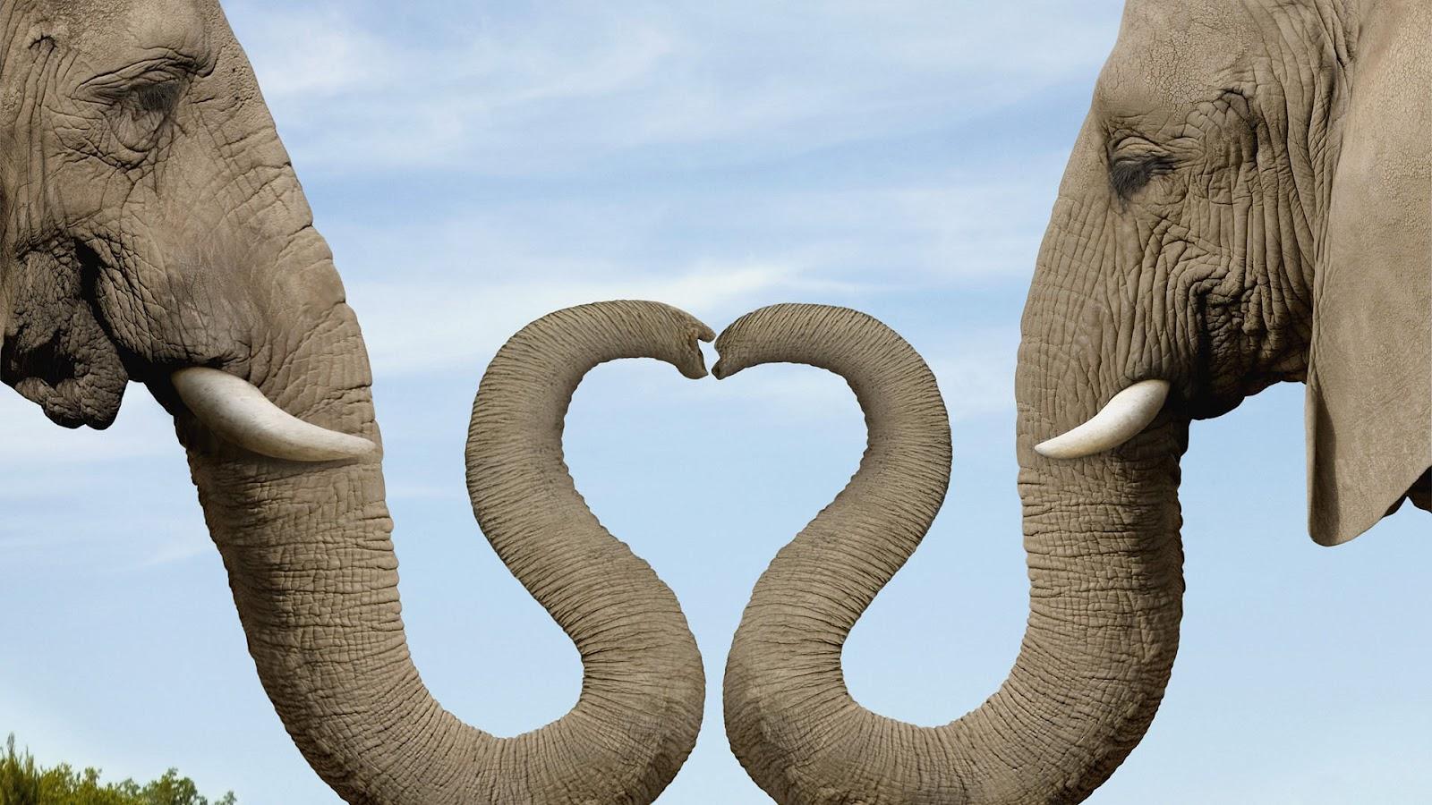 leuke symmetrische wallpaper met twee grijze olifanten