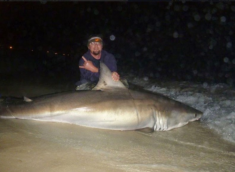 World sharks news florida caught a white shark from the for Shark fishing in florida