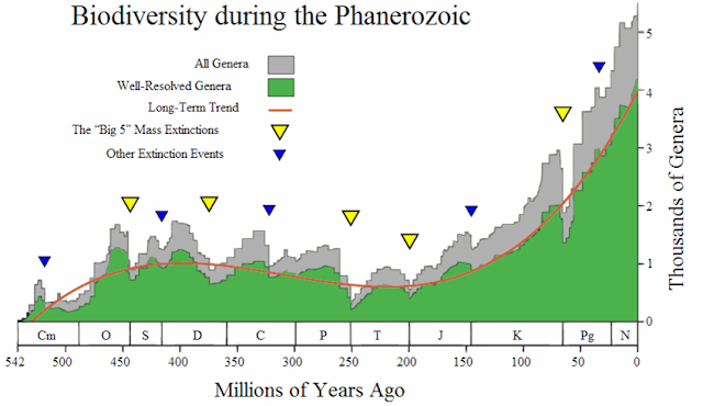 Biodiversity curve for the Phanerozoic era showing mass extinction events