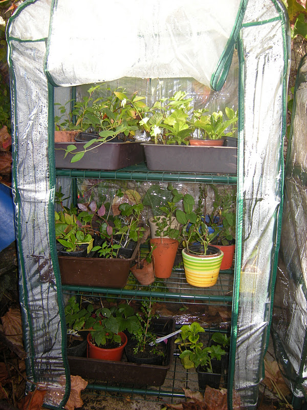 mon jardin en le de france mini serres. Black Bedroom Furniture Sets. Home Design Ideas