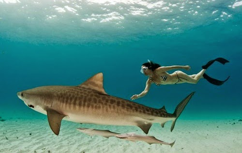bikini girls swimming and play with sharks