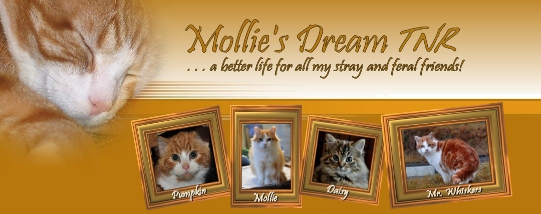 Mollie's Dream TNR