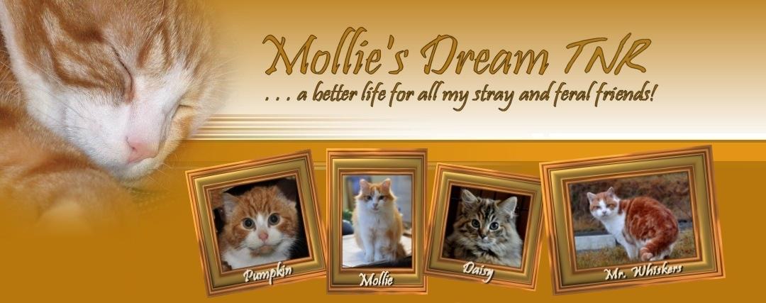 Mollie's Dream TNR