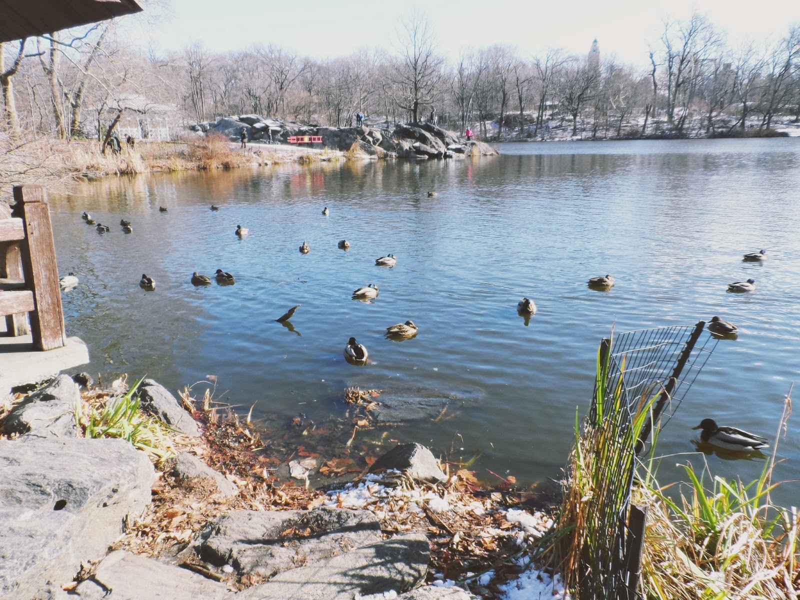 central park, duck pond, new york, travel