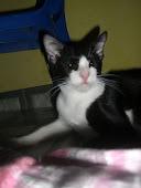 my cat ( CIK )