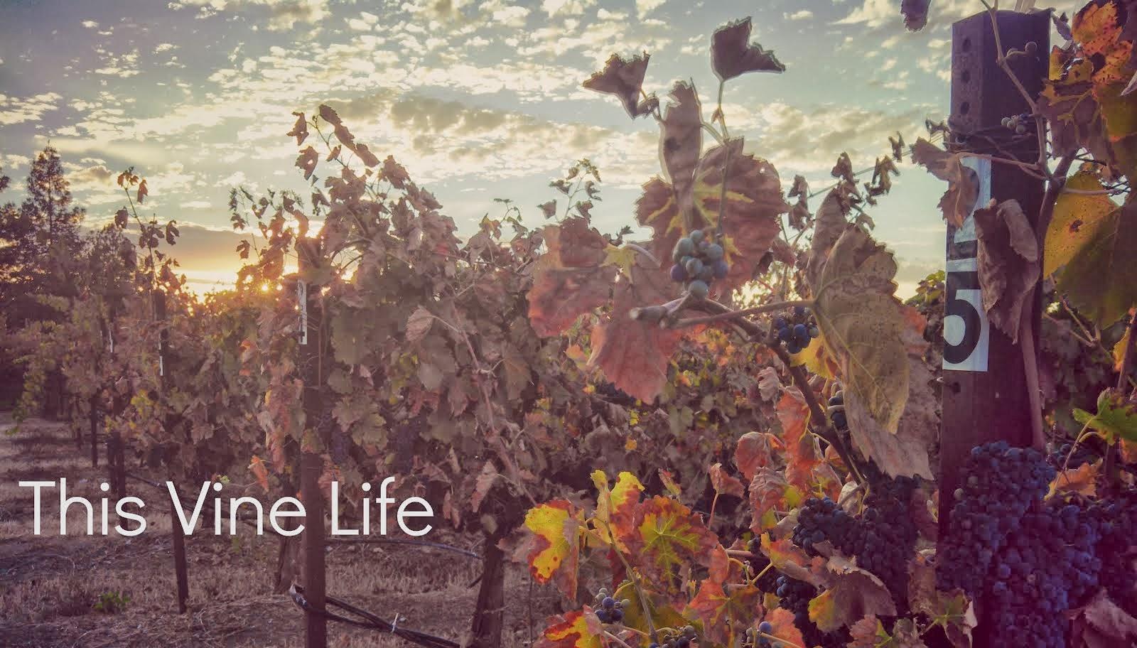 This Vine Life