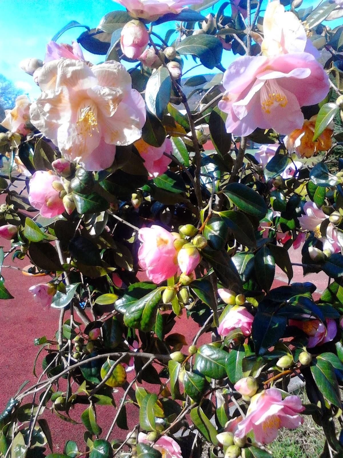 botanico de gijon