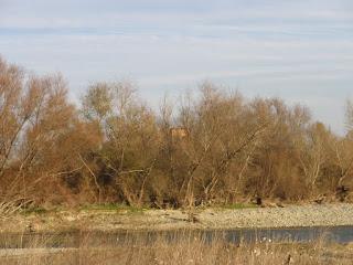 Observatorios ornitológico mirador de aves desembocadura Gállego Ebro Zaragoza