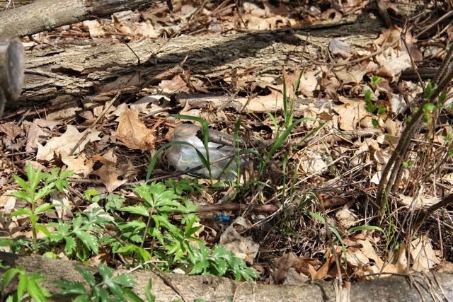 clear plastic water bottle