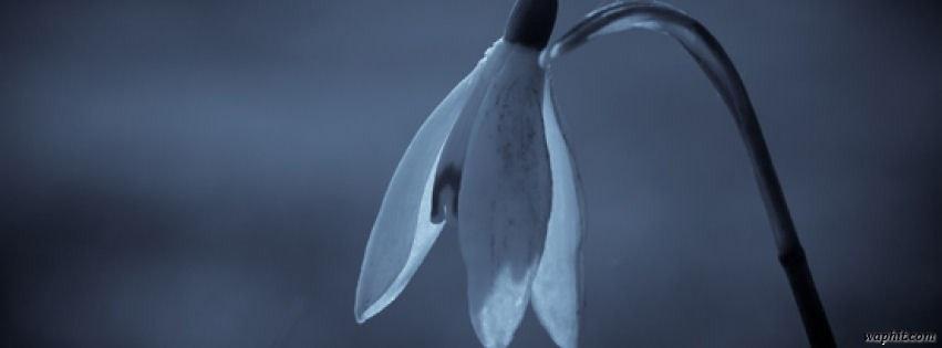 Üzgün çiçek facebook kapak fotoğrafı
