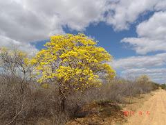A floração do sete cascas