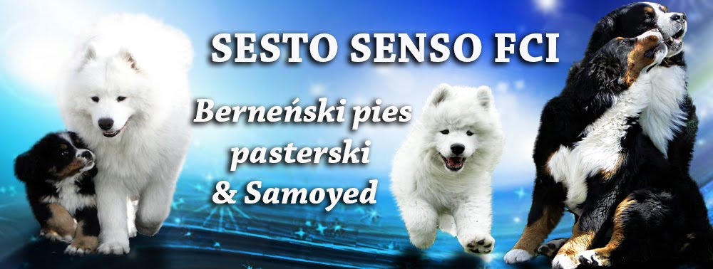 Hodowla Sesto Senso FCI