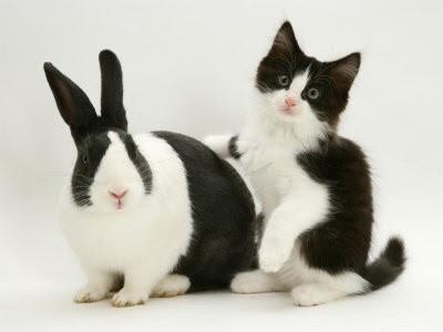 Kucing dan Kelinci Lucu