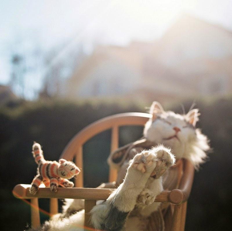 gatos sentados como personas