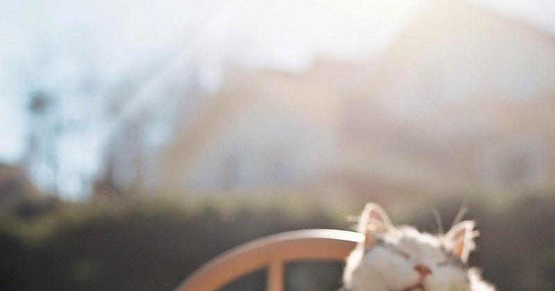 Cómicas estampas de gatos sentados como personas   Maria